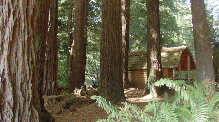 Crescent City Redwoods Koa 101 Things To Do Southern Oregon Amp Del Norte Ca