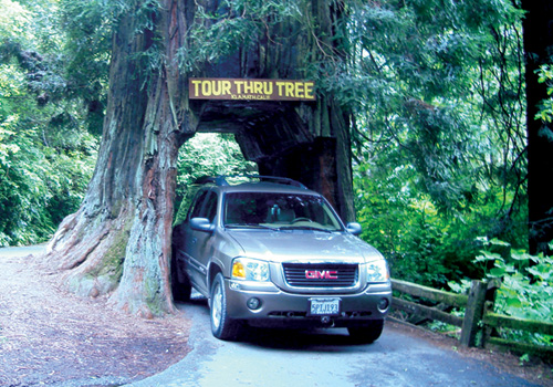 #7 – Tour Thru Tree