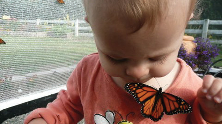 butterfly-way-toddler