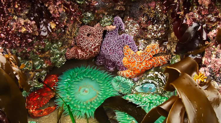87 Tide Pooling 101 Things To Do Humboldt