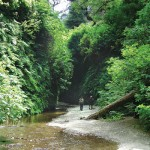 #93 Amazing Fern Canyon