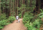 #71 Arcata Community Forest