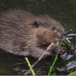 Find out about the wildlife that abounds on the Napa River.