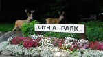#95 – Historic Lithia Park